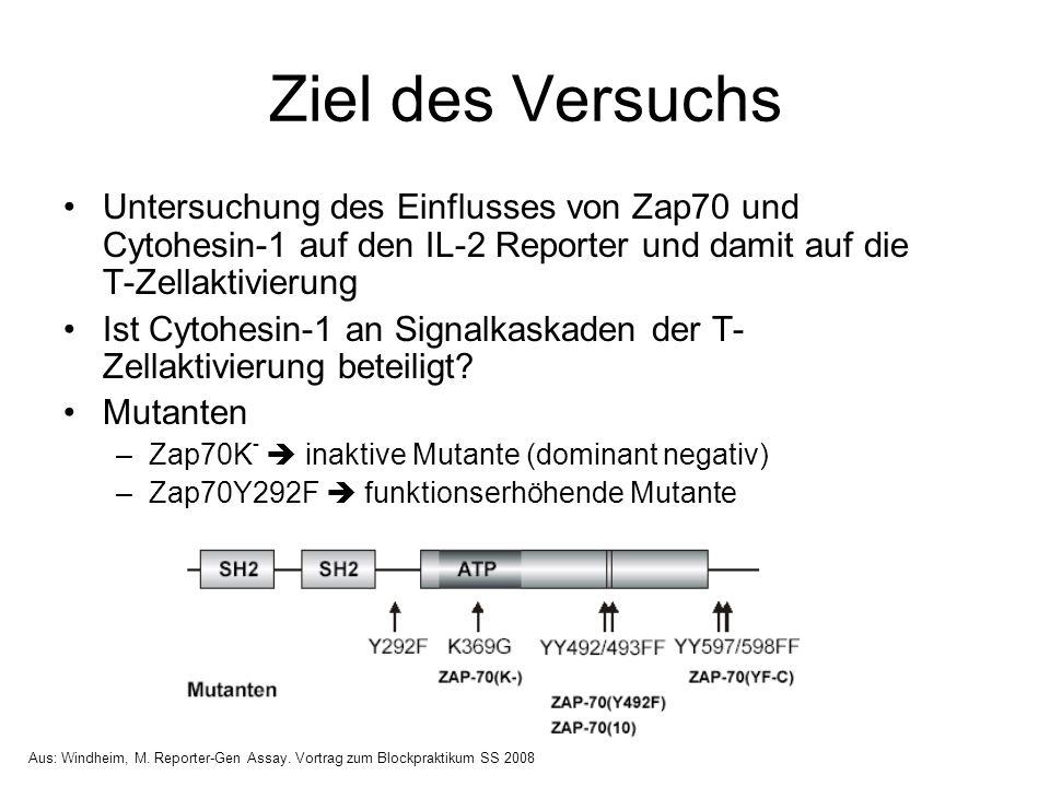 Ziel des Versuchs Untersuchung des Einflusses von Zap70 und Cytohesin-1 auf den IL-2 Reporter und damit auf die T-Zellaktivierung Ist Cytohesin-1 an S