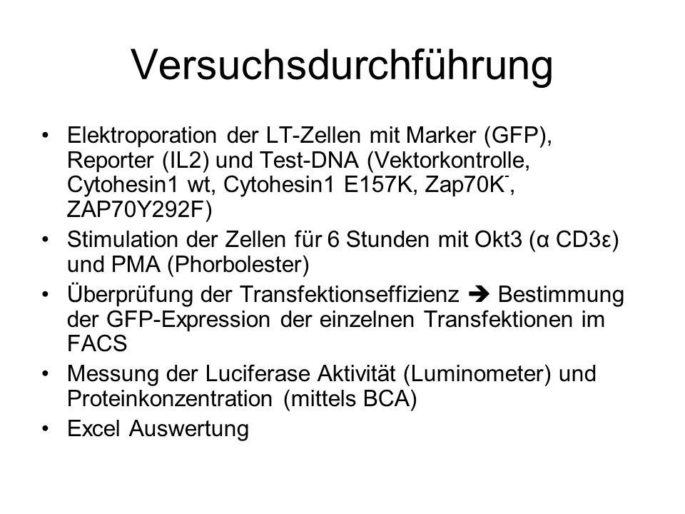 Versuchsdurchführung Elektroporation der LT-Zellen mit Marker (GFP), Reporter (IL2) und Test-DNA (Vektorkontrolle, Cytohesin1 wt, Cytohesin1 E157K, Za