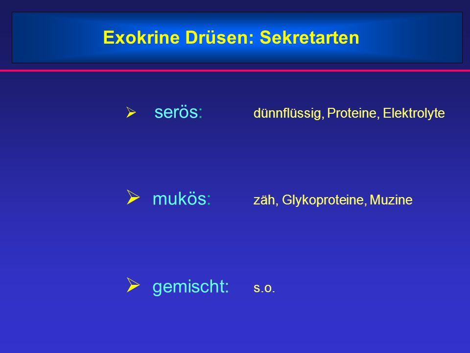 Exokrine Drüsen: Sekretarten serös: dünnflüssig, Proteine, Elektrolyte mukös: zäh, Glykoproteine, Muzine gemischt: s.o.
