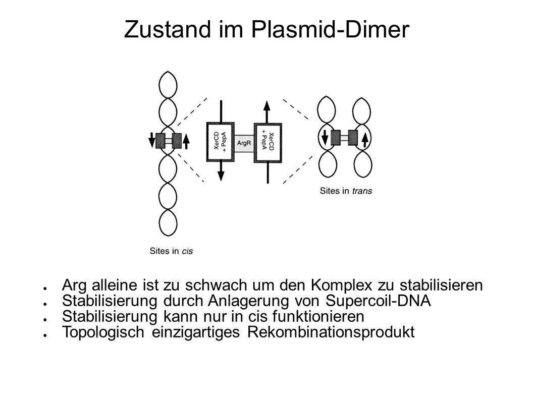 Zustand im Plasmid-Dimer Arg alleine ist zu schwach um den Komplex zu stabilisieren Stabilisierung durch Anlagerung von Supercoil-DNA Stabilisierung kann nur in cis funktionieren Topologisch einzigartiges Rekombinationsprodukt