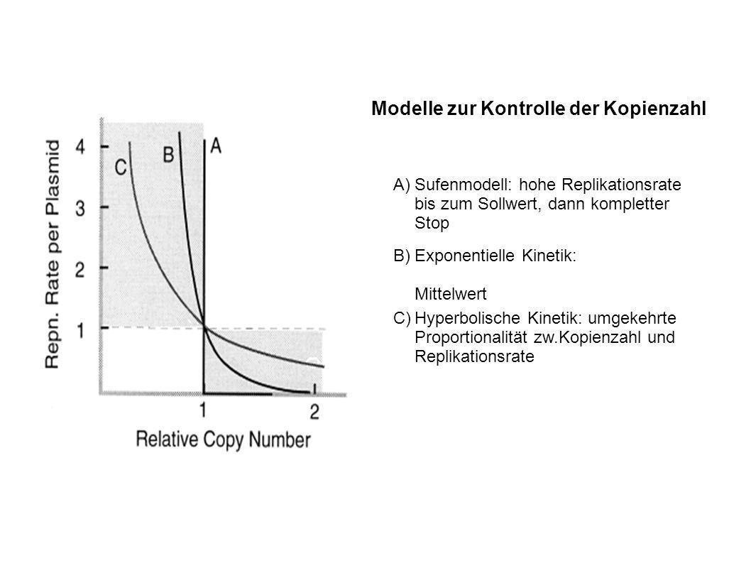 Modelle zur Kontrolle der Kopienzahl A)Sufenmodell: hohe Replikationsrate bis zum Sollwert, dann kompletter Stop B)Exponentielle Kinetik: Mittelwert C)Hyperbolische Kinetik: umgekehrte Proportionalität zw.Kopienzahl und Replikationsrate