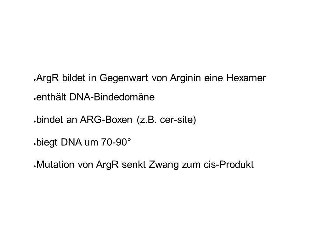ArgR bildet in Gegenwart von Arginin eine Hexamer enthält DNA-Bindedomäne bindet an ARG-Boxen (z.B.