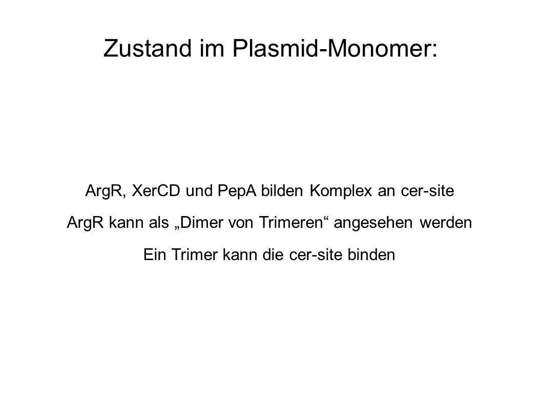 Zustand im Plasmid-Monomer: ArgR, XerCD und PepA bilden Komplex an cer-site ArgR kann als Dimer von Trimeren angesehen werden Ein Trimer kann die cer-site binden