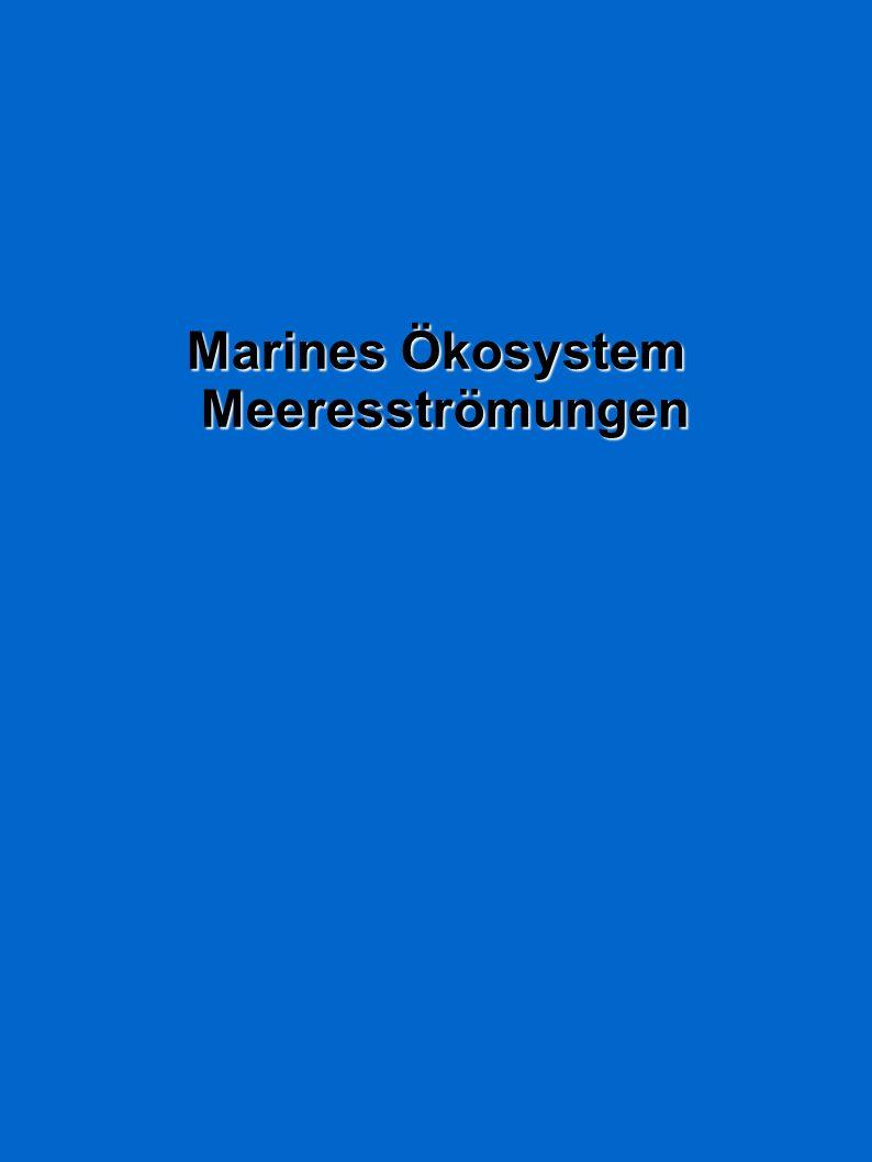 Marines Ökosystem Marines Ökosystem Meeresströmungen Meeresströmungen