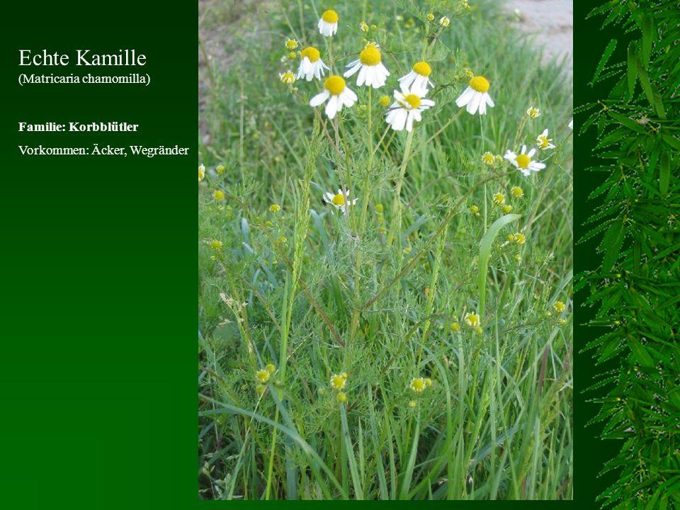 Echte Kamille (Matricaria chamomilla) Familie: Korbblütler Vorkommen: Äcker, Wegränder