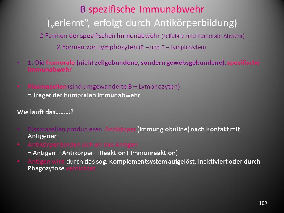 Prinzipien der Immunabwehr : A unspezifische Immunabwehr (angeboren, erfolgt durch Phagozytose) 3 Typen von Phagozytose – Zellen 1. Makrophagen ( Mono