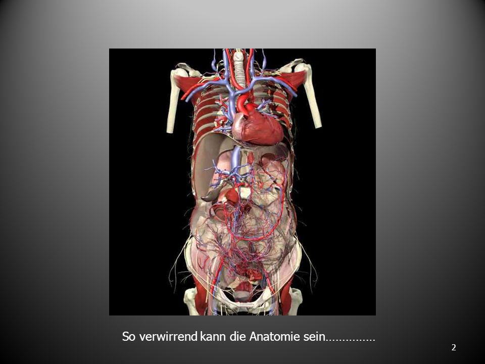 2 So verwirrend kann die Anatomie sein……………