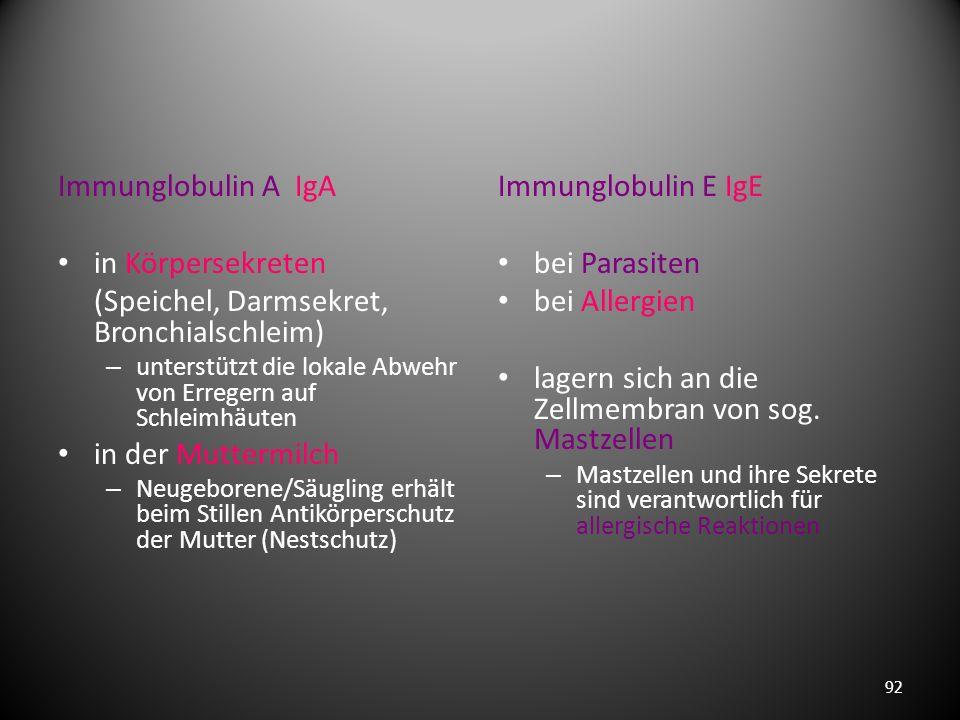 Immunglobulin G IgG 80% der Antikörper – werden in der späten Phase der Erstinfektion gebildet – auch bei erneuter Infektion mit dem gleichen Erreger