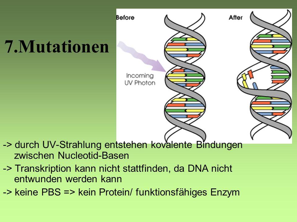 6. Translation -> findet an den Ribosomen statt -> m-RNA diffundiert zu den Ribosomen -> kleine Untereinheit des Ribosoms lagert sich an m-RNA an -> Z