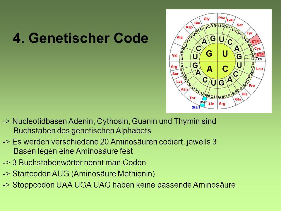 RNA RNA/RNS (Ribonukleinsäure) -> Einzelstrang -> besteht aus Zucker (Ribose), Phosphat und Basen -> Basen: Adenin, Guanin, Cytosin und Uracil -> komp