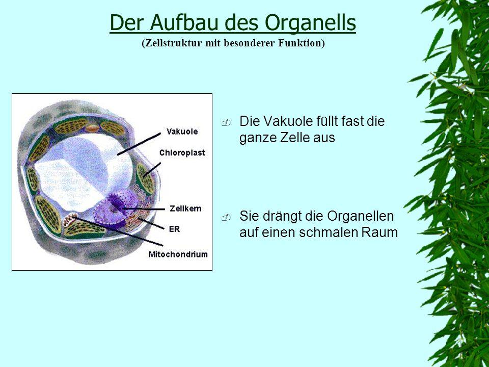 Die Vakuole lässt sich in 3 Schwerpunkte unterteilen: 1. Aufbau 2. Aufgabe 3. Entwicklung