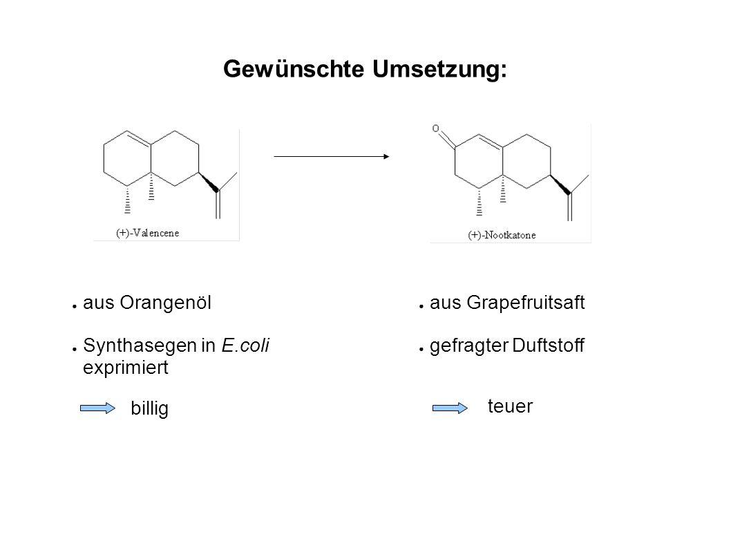 Ansatz: Biologische Oxidation von (+)-Valencene mit P450 Monooxygenase zu (+)-Nootkatone Probleme: (+)-Valencene kein Substrat für Wildtyp P450 (+)-Nootkatone inhibiert P450 Neben (+)-Nootkatone entstehen auch andere Produkte Verwendung von Enzymen mit Punktmutationen