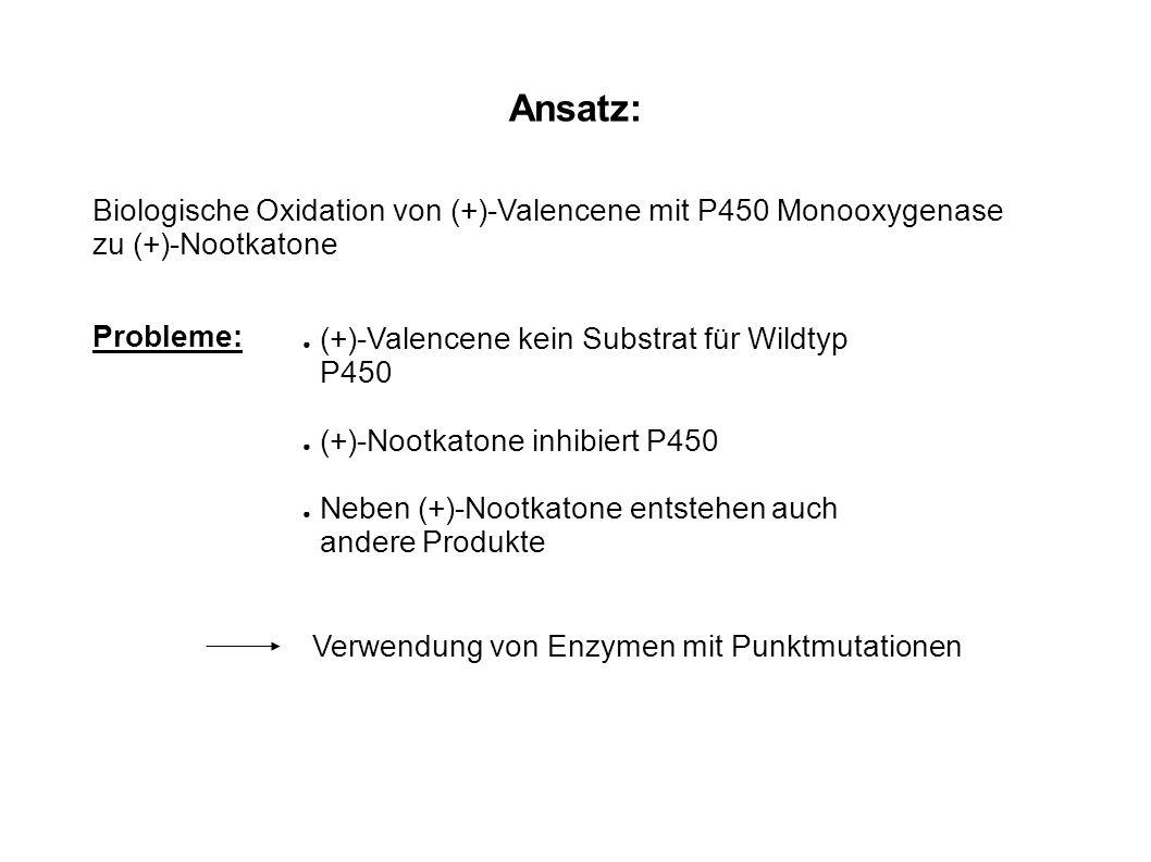 Ansatz: Biologische Oxidation von (+)-Valencene mit P450 Monooxygenase zu (+)-Nootkatone Probleme: (+)-Valencene kein Substrat für Wildtyp P450 (+)-No