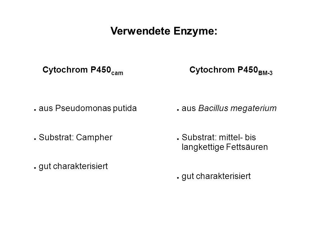 Verwendete Mutationen bei P450 cam : F87A: kleinere AS Y96F: hydrophobere AS V247L: schließt Substrattasche L244A: schafft Platz am Häm Die Versuche wurden in vitro durchgeführt