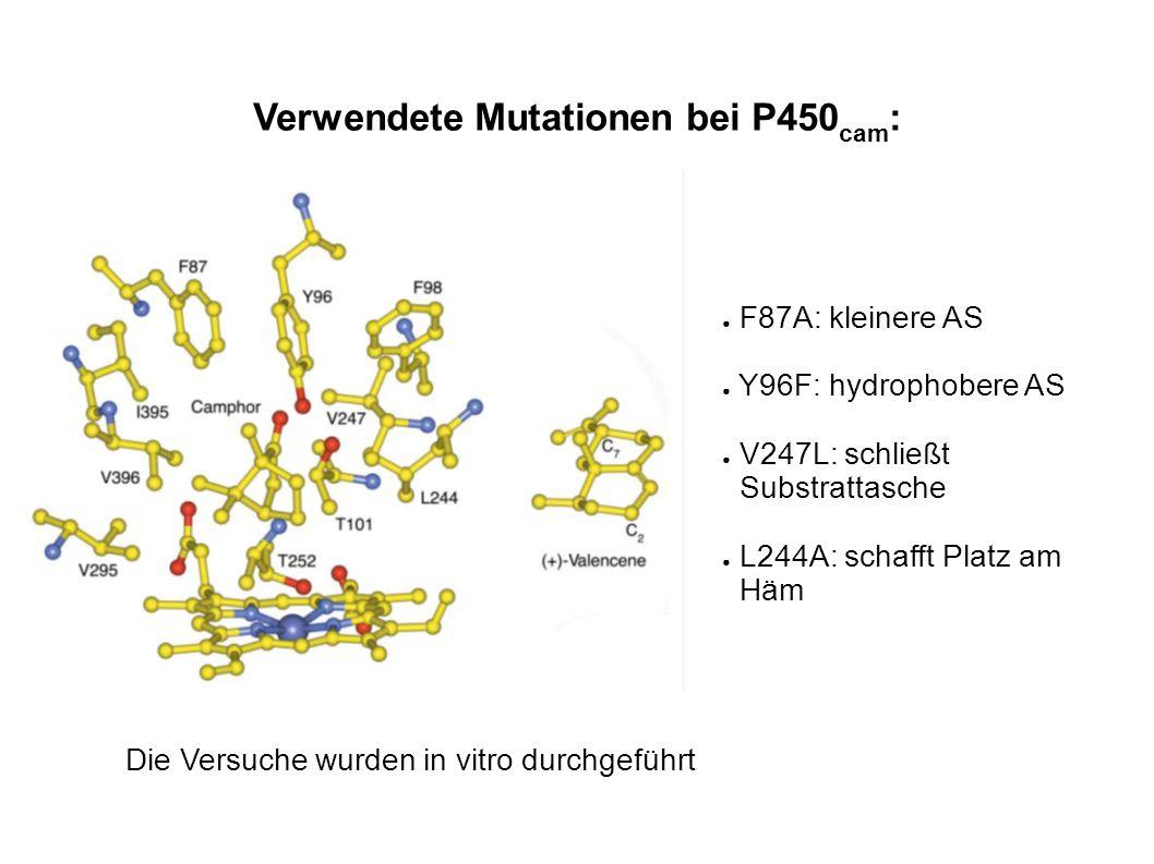 Verwendete Mutationen bei P450 cam : F87A: kleinere AS Y96F: hydrophobere AS V247L: schließt Substrattasche L244A: schafft Platz am Häm Die Versuche w