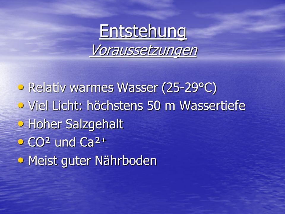 Entstehung Voraussetzungen Relativ warmes Wasser (25-29°C) Relativ warmes Wasser (25-29°C) Viel Licht: höchstens 50 m Wassertiefe Viel Licht: höchsten