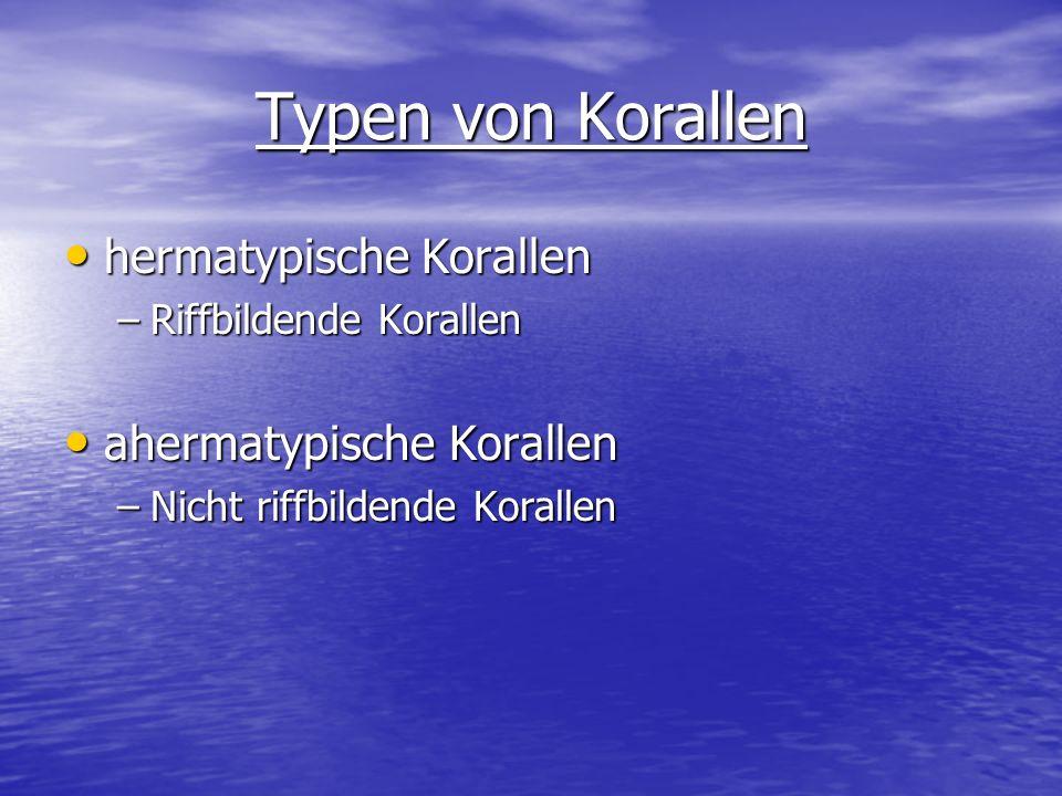 Typen von Korallen hermatypische Korallen hermatypische Korallen –Riffbildende Korallen ahermatypische Korallen ahermatypische Korallen –Nicht riffbil