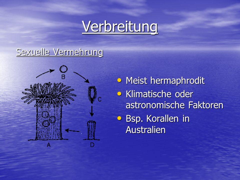 Verbreitung Sexuelle Vermehrung Meist hermaphrodit Meist hermaphrodit Klimatische oder astronomische Faktoren Klimatische oder astronomische Faktoren