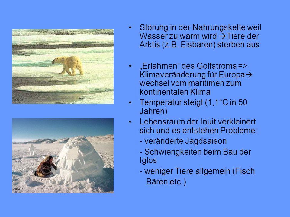 Störung in der Nahrungskette weil Wasser zu warm wird Tiere der Arktis (z.B. Eisbären) sterben aus Erlahmen des Golfstroms => Klimaveränderung für Eur