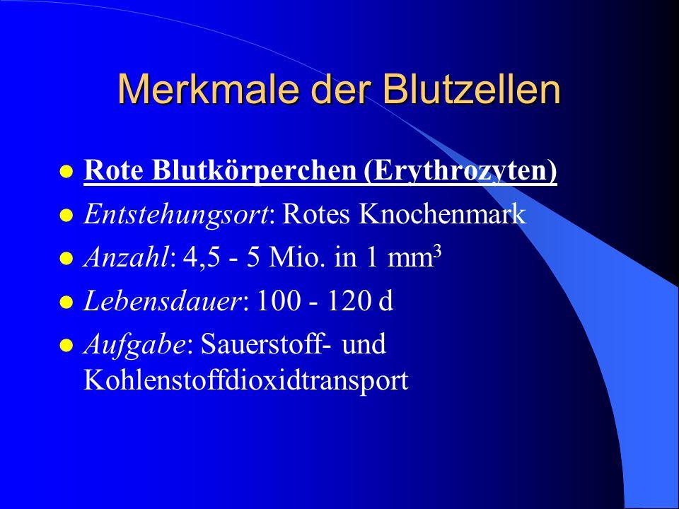 Merkmale der Blutzellen l Rote Blutkörperchen (Erythrozyten) l Entstehungsort: Rotes Knochenmark l Anzahl: 4,5 - 5 Mio.