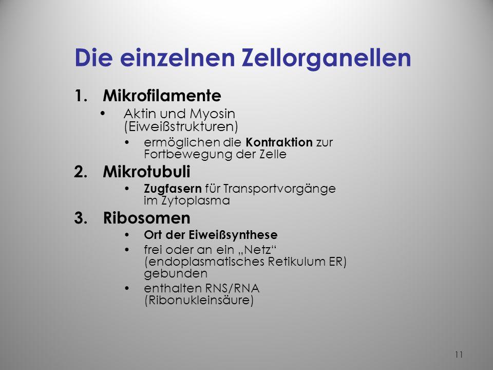 10 Die Zellorganellen verschiedene Bestandteile oder Organe im Zytoplasma Aufgaben –erlauben einen eigenen Stoffwechsel der Zelle –erbringen spezielle