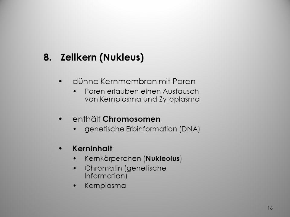 15 7.Mitochondrien länglich- ovale Strukturen haben ein Doppelmembransystem sind Energieproduzenten (Kraftwerke) produzieren ATP (Adenosin- Triphospha