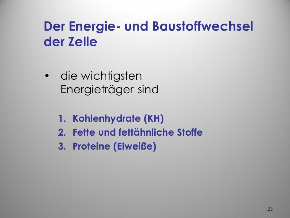 22 3.Filtration –Transport von Flüssigkeiten durch semipermeable Membran –treibende Kraft ist das Druckgefälle – Beispiel –Produktion des Primärharns