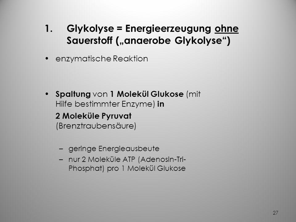 26 Die Energiegewinnung aus Glukose bevorzugter Brennstoff zur lebensnotwendigen Energiegewinnung Energiegewinnung durch Glukoseabbau Glukoseabbau erf