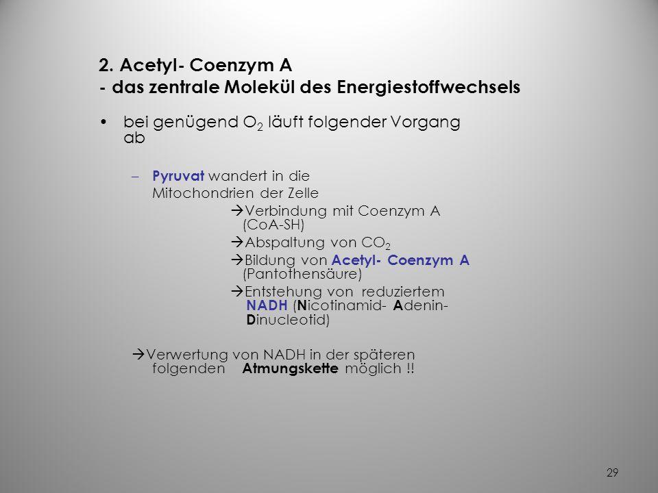 28 – bei O 2 - Mangel keine Weiterverwertung des Pyruvat in Muskelzellen Umbildung zu Laktat Anhäufung von Laktat in Leber Laktatazidose (bei untraini