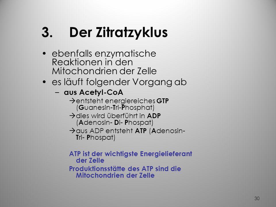29 2. Acetyl- Coenzym A - das zentrale Molekül des Energiestoffwechsels bei genügend O 2 läuft folgender Vorgang ab – Pyruvat wandert in die Mitochond