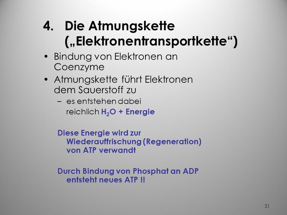 30 3.Der Zitratzyklus ebenfalls enzymatische Reaktionen in den Mitochondrien der Zelle es läuft folgender Vorgang ab – aus Acetyl-CoA entsteht energie