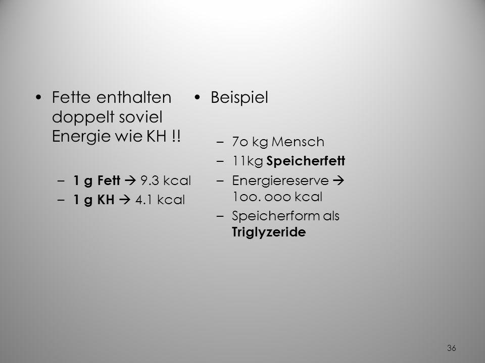 35 Neutralfette (Triglyzeride) beim Menschen Speicherung von Triglyzeriden im Zytoplasma von Fettzellen Zellkern Zytoplasma = Fett (Reserve für Notzei