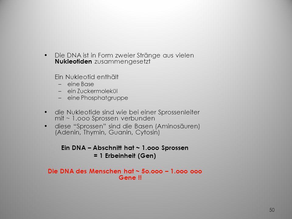 49 Die Nukleinsäuren Schlüssel der Vererbung –besondere Eiweißstrukturen aus Aminosäuren- Ketten –Reihenfolge der Verkettung ist genetisch exakt festg