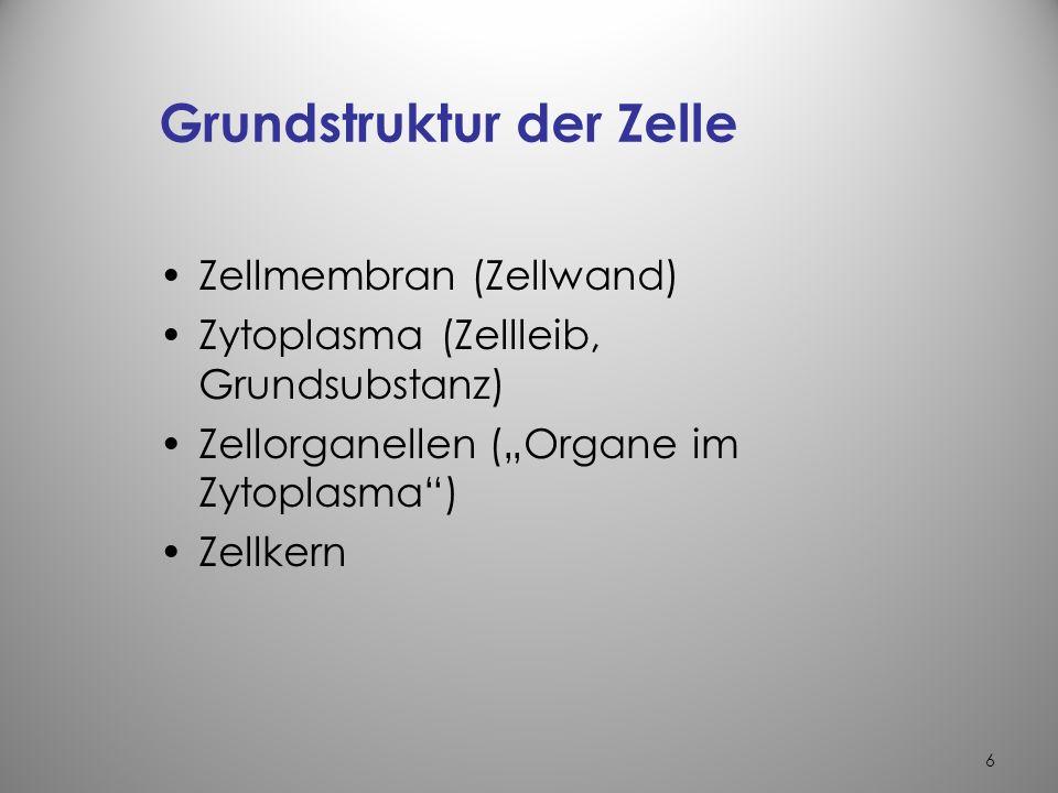 6 Grundstruktur der Zelle Zellmembran (Zellwand) Zytoplasma (Zellleib, Grundsubstanz) Zellorganellen (Organe im Zytoplasma) Zellkern