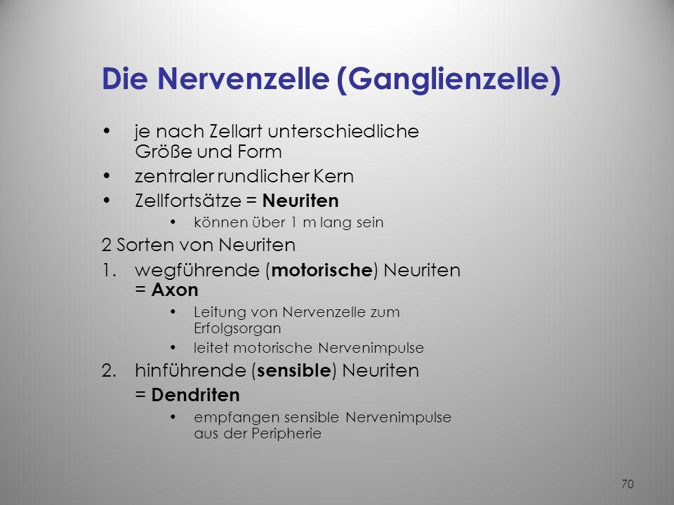 69 Das Nervengewebe Aufgabe des Nervensystems –Reizaufnahme –Reizverarbeitung –Reizleitung Bestandteile des Nervengewebes –Nervenzellen –Nervenfasern