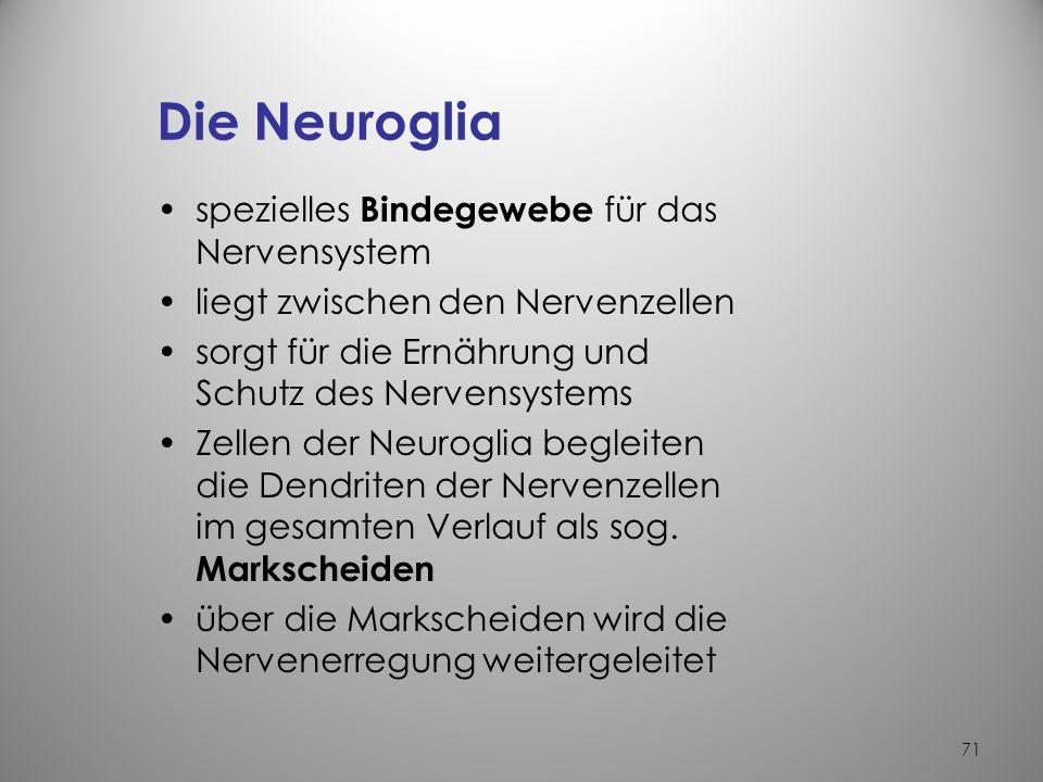 70 Die Nervenzelle (Ganglienzelle) je nach Zellart unterschiedliche Größe und Form zentraler rundlicher Kern Zellfortsätze = Neuriten können über 1 m