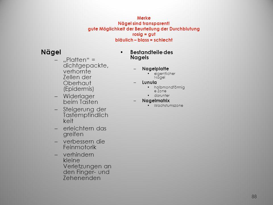 87 – Schweißdrüsen münden in Hautporen überall nicht an –Lippenrand, Nagelbett, Eichel, Klitoris, kleine Labien, Trommelfell – Duftdrüsen Achselhöhlen