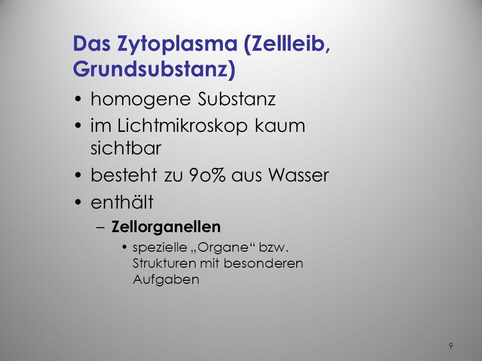 9 Das Zytoplasma (Zellleib, Grundsubstanz) homogene Substanz im Lichtmikroskop kaum sichtbar besteht zu 9o% aus Wasser enthält – Zellorganellen spezielle Organe bzw.