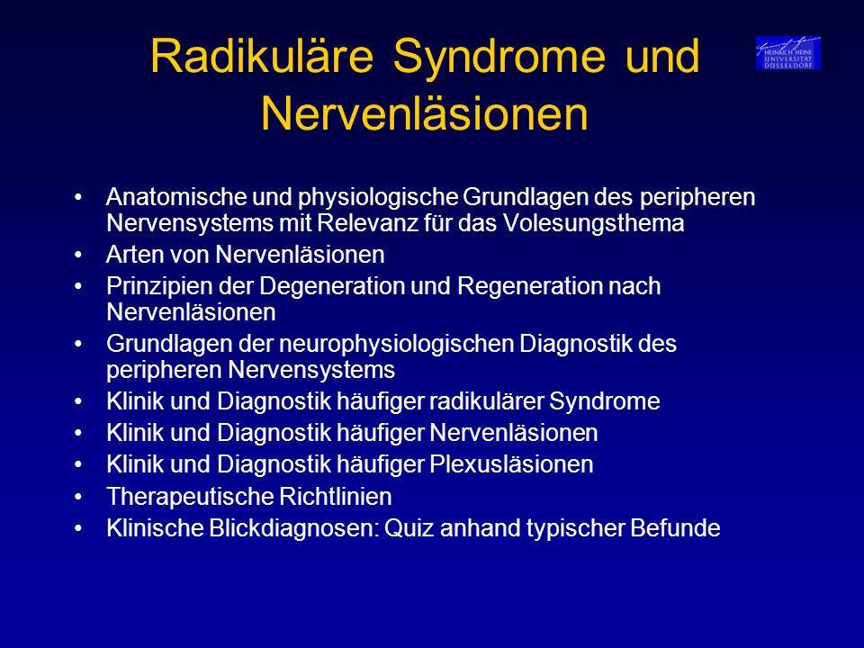 Radikuläre Syndrome und Nervenläsionen Anatomische und physiologische Grundlagen des peripheren Nervensystems mit Relevanz für das Volesungsthema Arte
