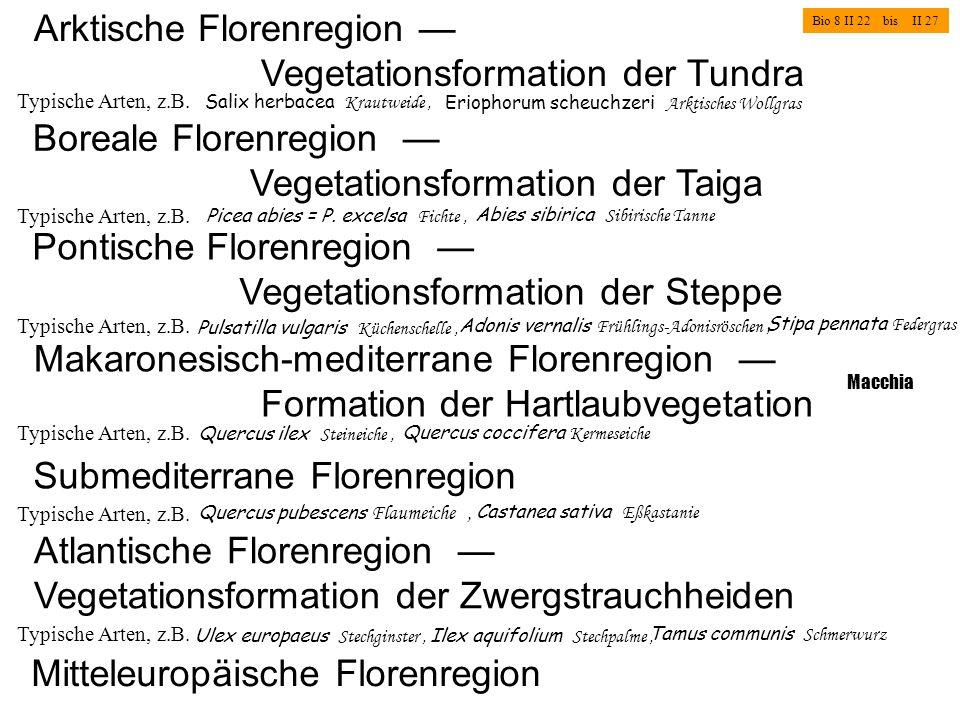 Arktische Florenregion Vegetationsformation der Tundra Typische Arten, z.B. Salix herbacea Krautweide, Eriophorum scheuchzeri Arktisches Wollgras Bio