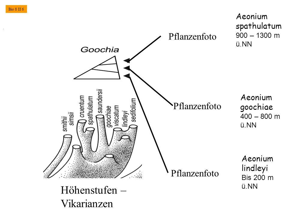 . Aeonium goochiae 400 – 800 m ü.NN Aeonium lindleyi Bis 200 m ü.NN Höhenstufen – Vikarianzen Aeonium spathulatum 900 – 1300 m ü.NN Pflanzenfoto Bio 8