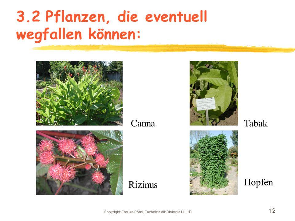 Copyright: Frauke Pöml, Fachdidaktik Biologie HHUD 11 3.2Bepflanzung des jetzigen Nutzpflanzenbereichs
