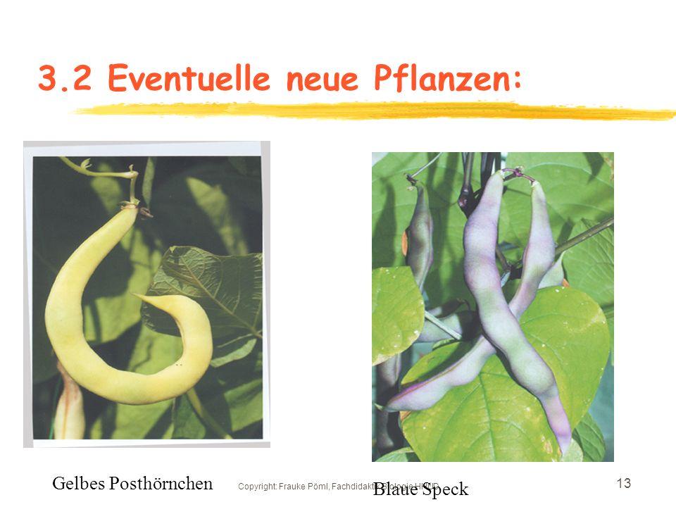 Copyright: Frauke Pöml, Fachdidaktik Biologie HHUD 12 3.2Pflanzen, die eventuell wegfallen können: CannaTabak Rizinus Hopfen