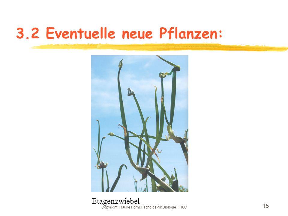 Copyright: Frauke Pöml, Fachdidaktik Biologie HHUD 14 3.2 Eventuelle neue Pflanzen: Birnentomaten Weißes Ei
