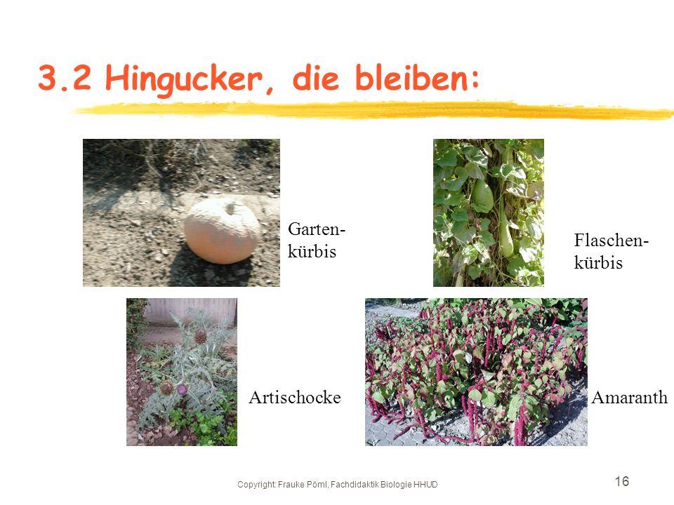 Copyright: Frauke Pöml, Fachdidaktik Biologie HHUD 15 3.2 Eventuelle neue Pflanzen: Etagenzwiebel