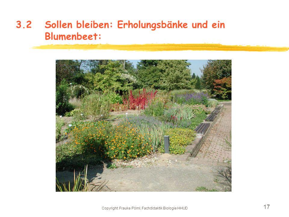 Copyright: Frauke Pöml, Fachdidaktik Biologie HHUD 16 3.2Hingucker, die bleiben: Garten- kürbis Flaschen- kürbis ArtischockeAmaranth