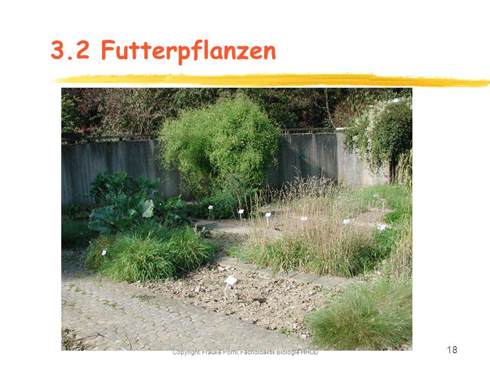 Copyright: Frauke Pöml, Fachdidaktik Biologie HHUD 17 3.2Sollen bleiben: Erholungsbänke und ein Blumenbeet: