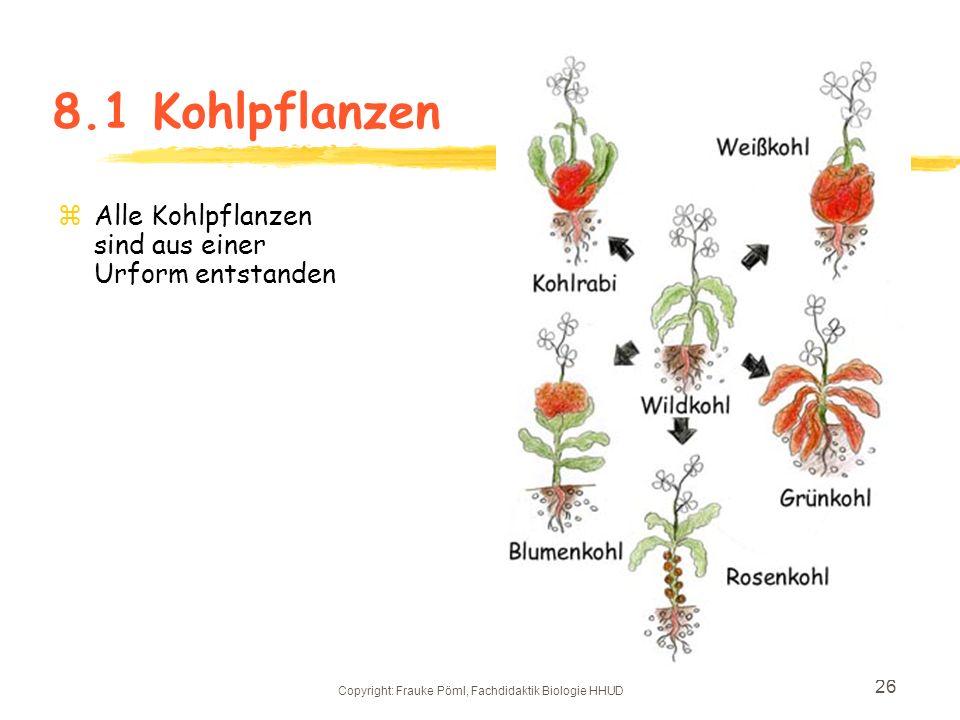 Copyright: Frauke Pöml, Fachdidaktik Biologie HHUD 25 zKohlenhydratliefernde Pflanzen zEiweißliefernde Pflanzen zFettliefernde Pflanzen zGemüse Beeren