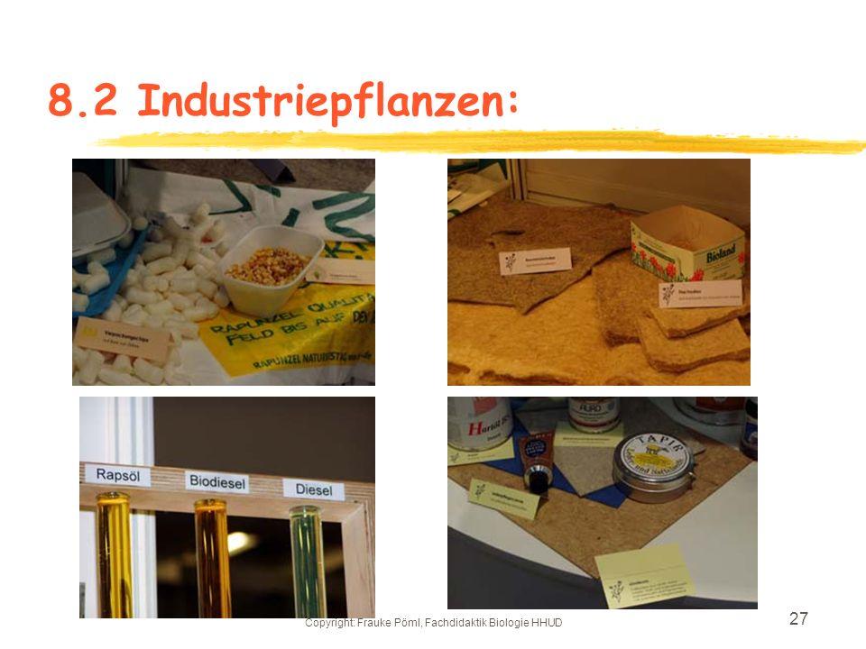 Copyright: Frauke Pöml, Fachdidaktik Biologie HHUD 26 zAlle Kohlpflanzen sind aus einer Urform entstanden 8.1 Kohlpflanzen