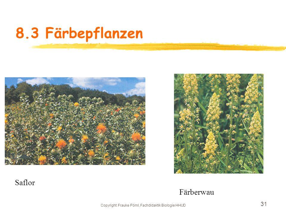 Copyright: Frauke Pöml, Fachdidaktik Biologie HHUD 30 8.3 Färbepflanzen zNahrungsmittelfarbstoffe: zRote BeeteBeta vulgaris var. conditiva rot zStockr